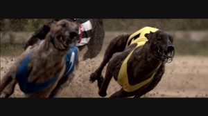 GENETIC ME 8 Dogs running